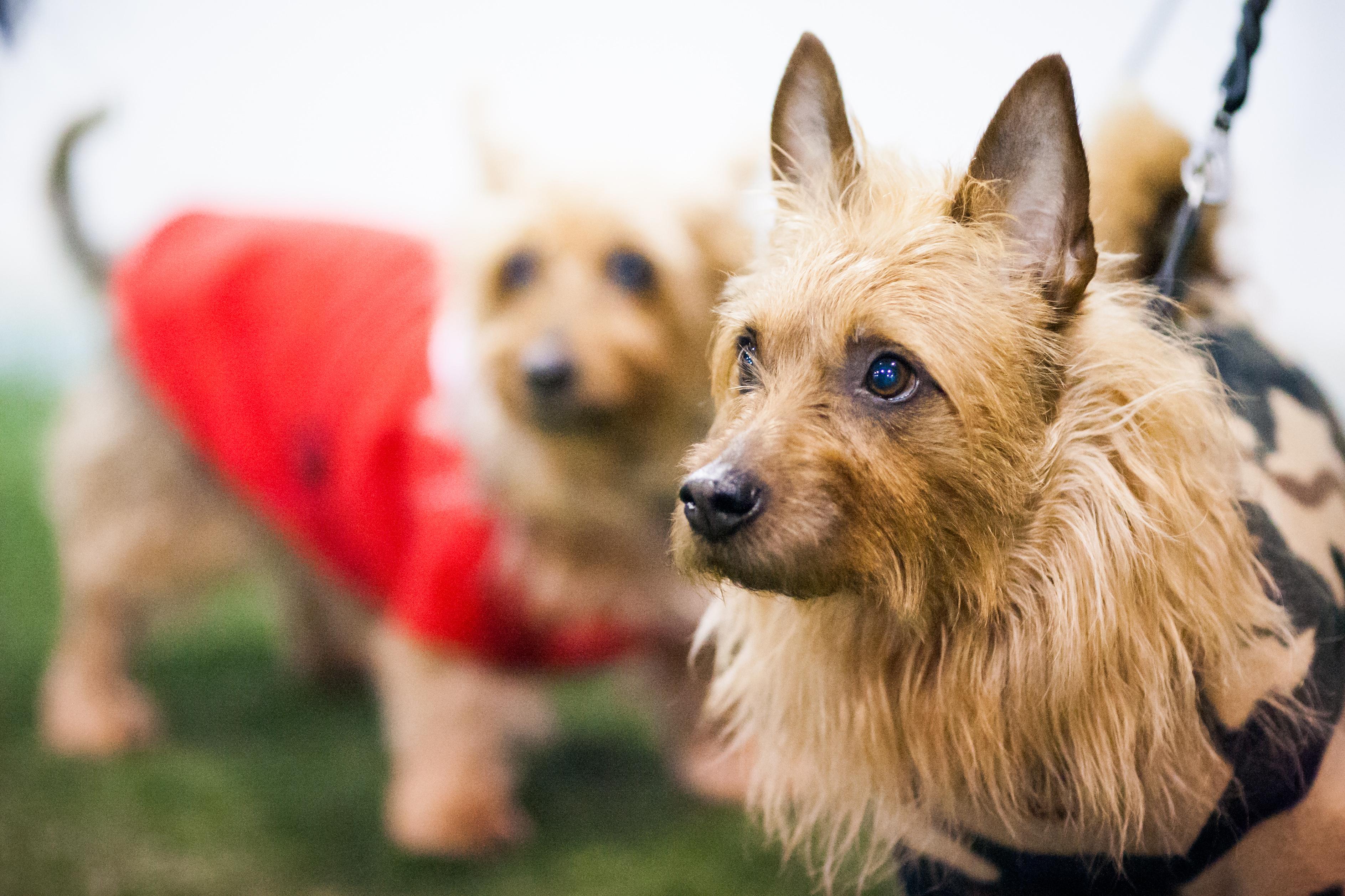 Koirarodut ja rotumääritelmät | Suomen Kennelliitto