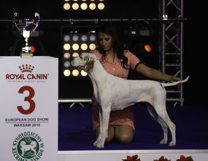 Finnish Success At European Dog Show 2018 In Poland Suomen Kennelliitto