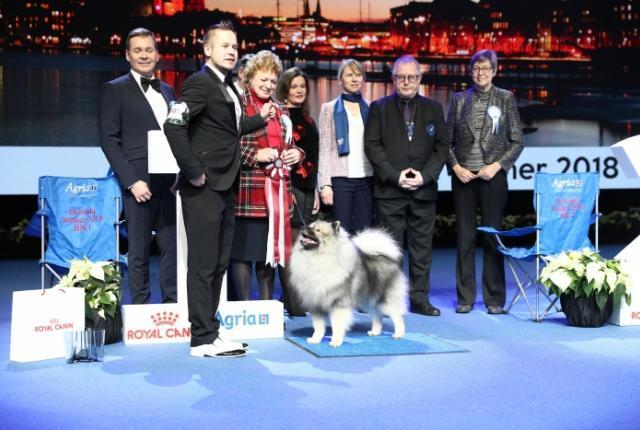 Keeshond Best In Show At Helsinki Winner Dog Show The Finnish