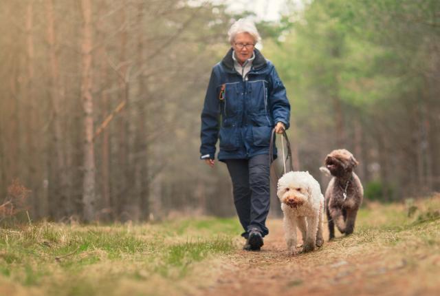Suomen Kennelliitto: Koiran lakisääteisen tunnistamisen ja rekisteröinnin tulee olla omistajalle mahdollisimman helppoa ja edullista